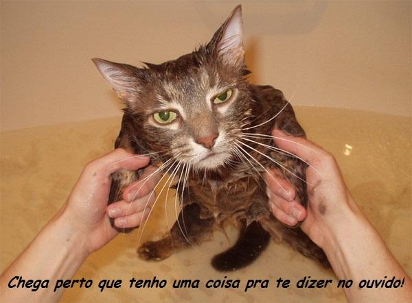 Gato no banho