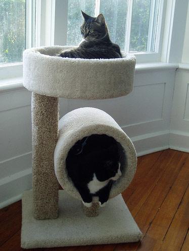 Criative-se: Ideias para a casinha do seu gato
