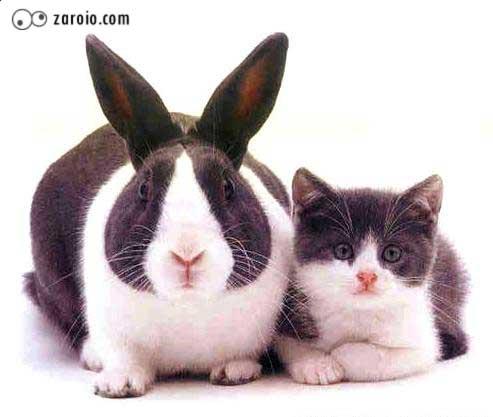 Gatinho e coelho