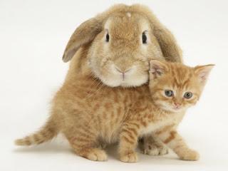 gatos e coelhos5