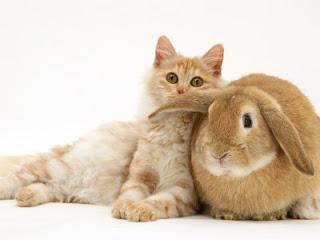 gatos e coelhos8