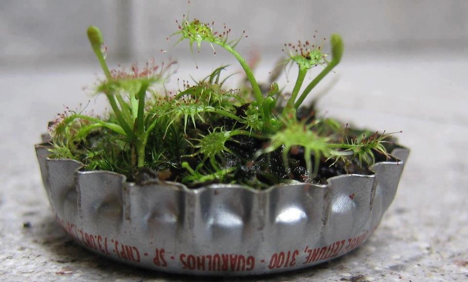 ideias pra jardim criativo reciclavel sustentabilidade labcriativo (9)