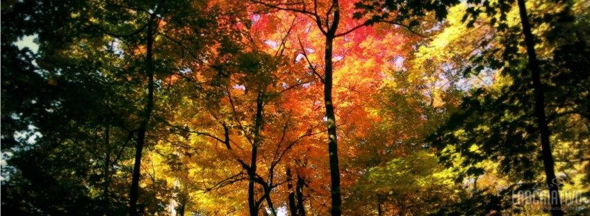 facebook timeline cover Autumn Forest HD HD Nature/Autumn,hd,wallpaper,Autumn,forest