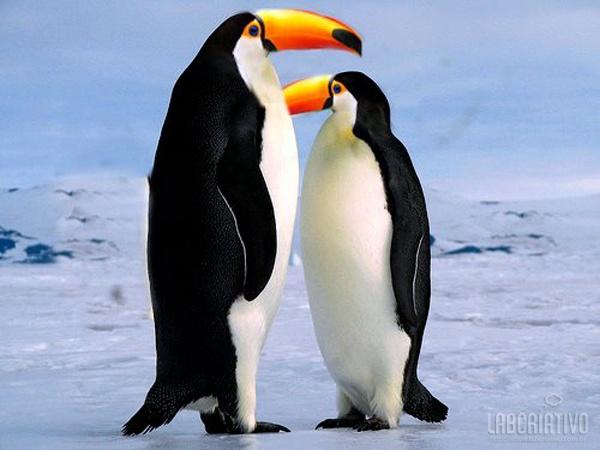 Cruzamento entre Pinguim + Tucano