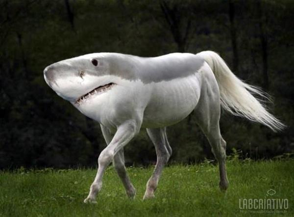 cruzamento de tubarão com cavalo