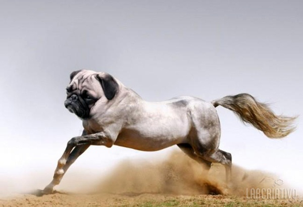 cruzamento de cachorro com cavalo