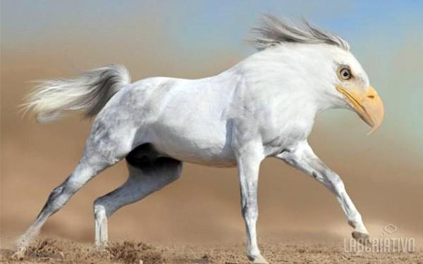 cruzamento de cavalo com águia