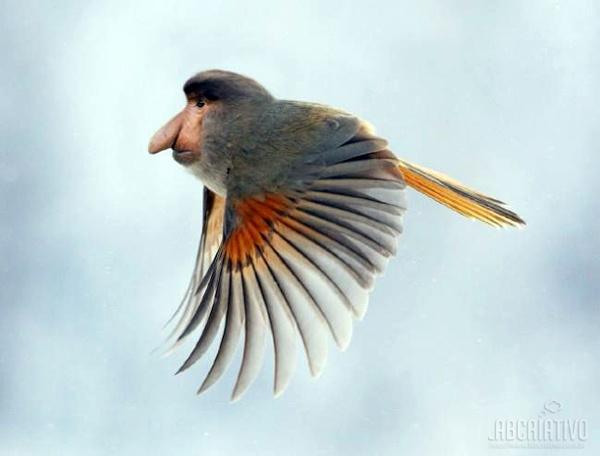 cruzamento de macaco com pássaro