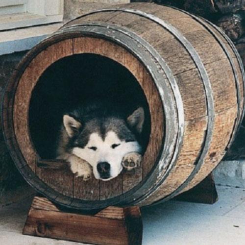 Modelos de casinhas para cachorros, super criativos (11)