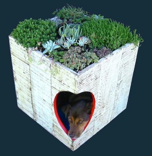Modelos de casinhas para cachorros, super criativos (19)