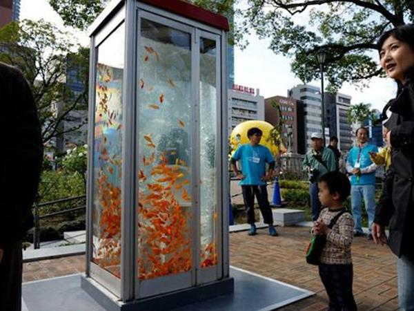 Cabines telefônicas viraram aquários