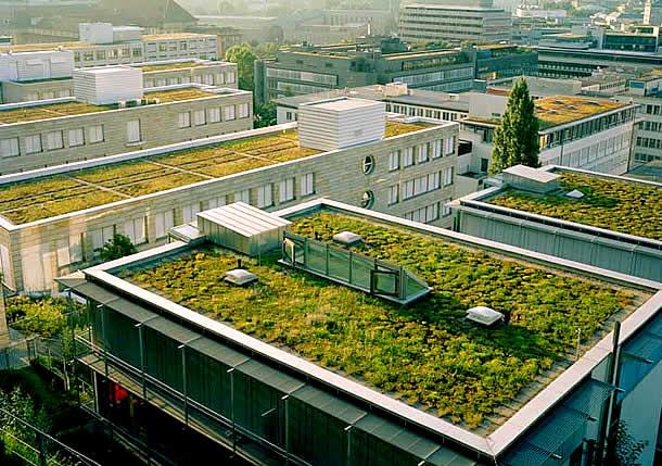 Telhados verdes criativos