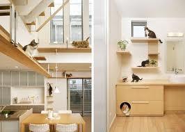 22 ideias criativas para seu gato