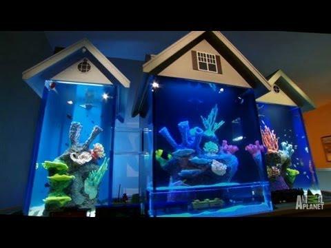 aquarios incriveis10