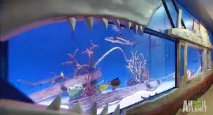 Brett Raymer e Wayde King junto ao  ator Tracy Morgan e seu novo aquário de tubarões