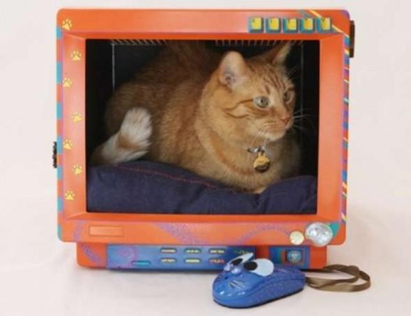 Que casinha mais linda para seu gatinho, monitor reciclado e personalizado