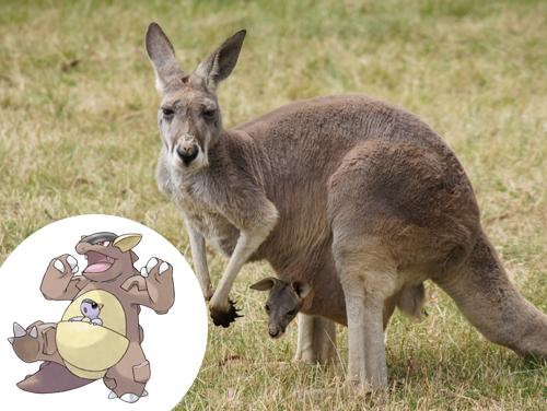 Kangaskhan Inspiração: Kanguru