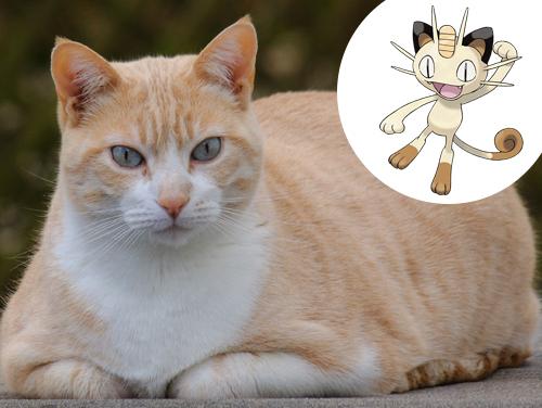 Meowth Inspiração: Gato