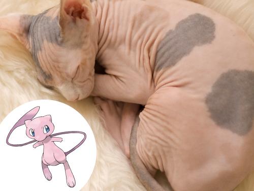 Mew Inspiração: Gatos da raça Sphynx