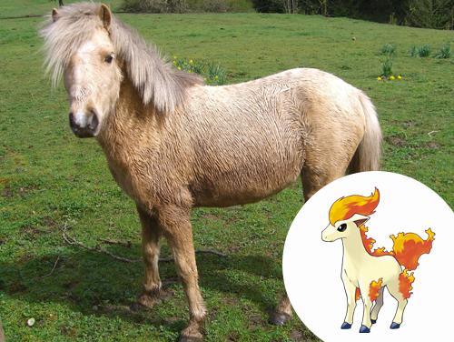 Ponyta Inspiração: Poneis