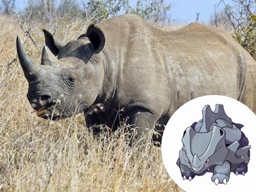 Rhyhorn Inspiração: Rinocerontes