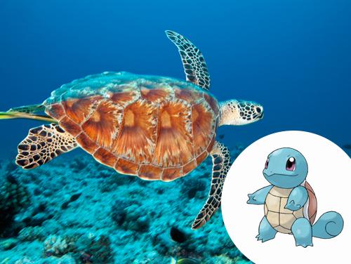 Squirtle Inspiração: Tartaruga marinha