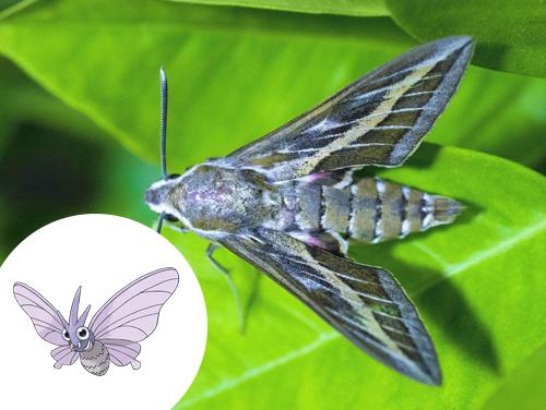 Venomoth Inspiração: Mariposa