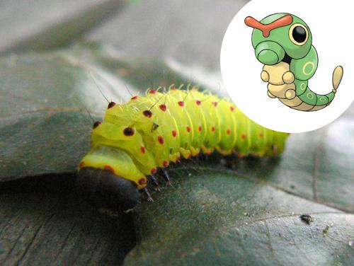 Caterpie Inspiração: Lagarta (Caterpillar)