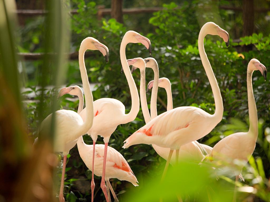 Tropical Islands - Flamingos