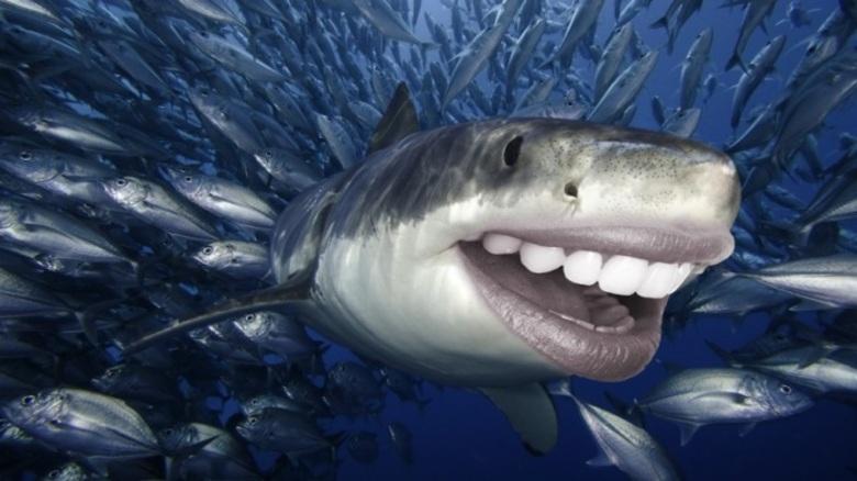 A diversão entre os amigos peixes