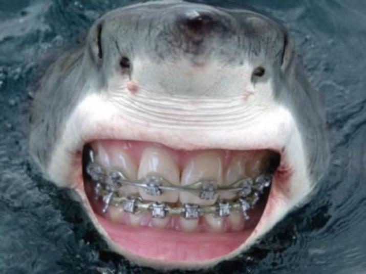 Tubarão branco na ostentação do aparelho dental