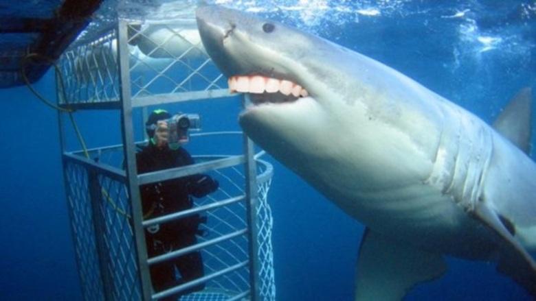 Tubarão roendo a grade