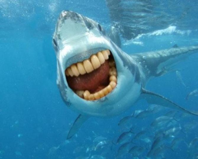 Esse tubarão precisa de um clareamento nos dentes