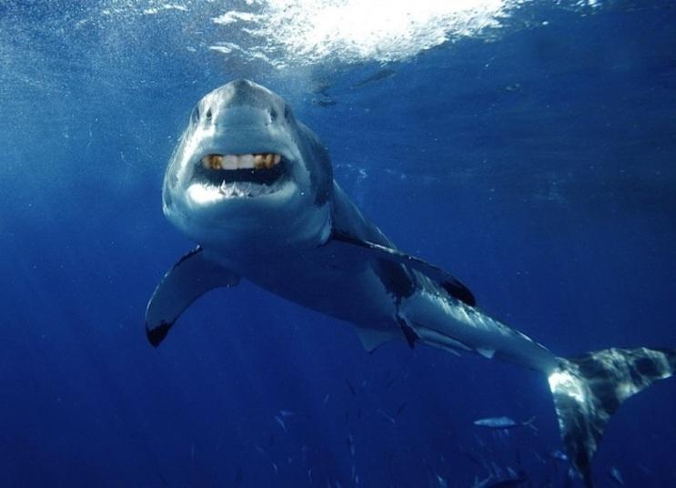 Tubarão Ostentação