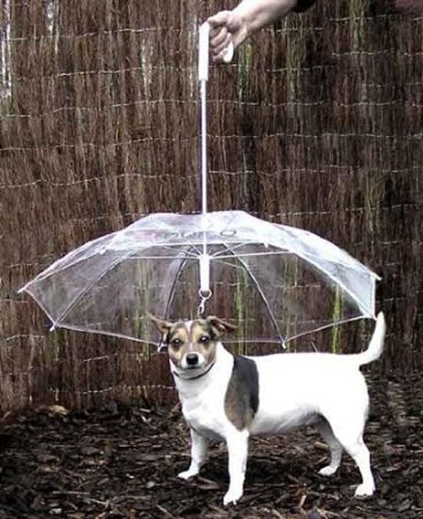 Para os dias de chuva.