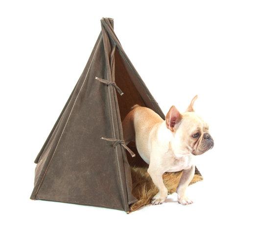 Acampar com o seu cão está mais fácil.
