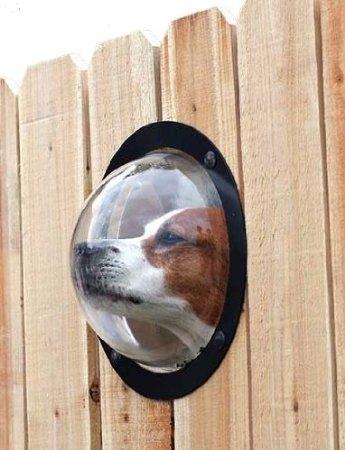Dê uma janela para que o seu cachorro possa olhar a vizinhança, eles adoram isso.