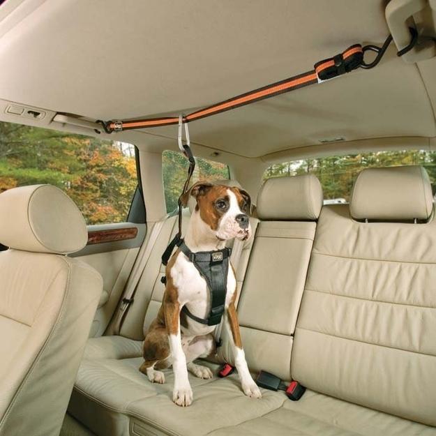 """Seu cachorro vive tentando subir no banco da frente? Utilize essa espécie de """"cinto"""" de segurança"""