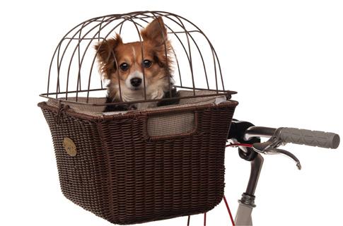 Vai pedalar ? Veja essa cestinha para bicicleta, que fofo !